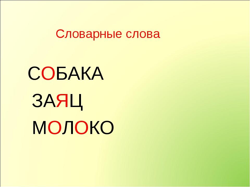 Словарные слова СОБАКА ЗАЯЦ МОЛОКО