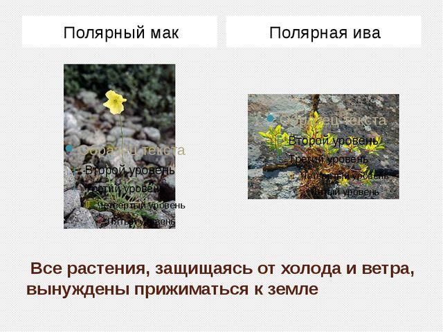 Все растения, защищаясь от холода и ветра, вынуждены прижиматься к земле Пол...