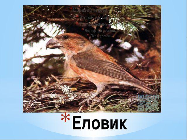 Еловик