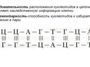 Последовательность расположения нуклеотидов в цепочке ДНК определяет наследст