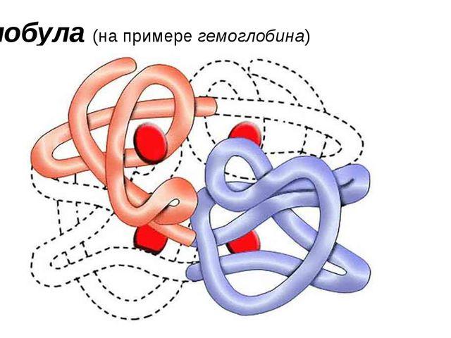 Глобула (на примере гемоглобина)