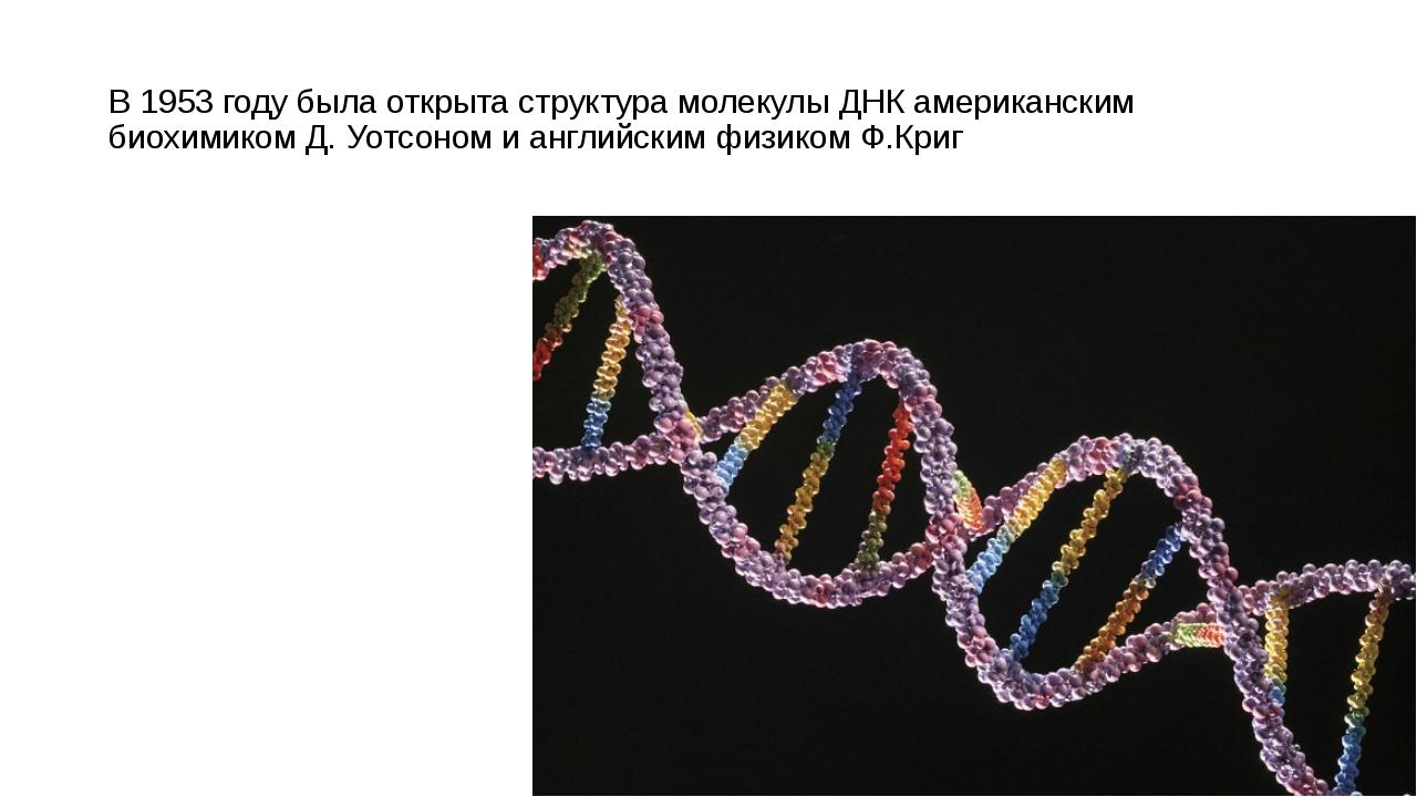 В 1953 году была открыта структура молекулы ДНК американским биохимиком Д. Уо...