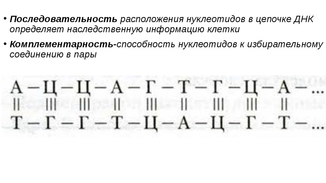 Последовательность расположения нуклеотидов в цепочке ДНК определяет наследст...