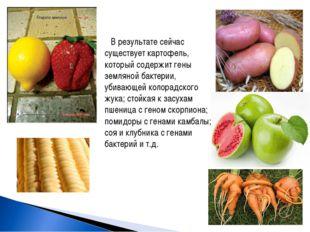 В результате сейчас существует картофель, который содержит гены земляной бакт
