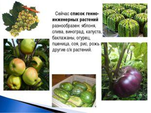 Сейчас список генно-инженерных растений разнообразен: яблоня, слива, виноград