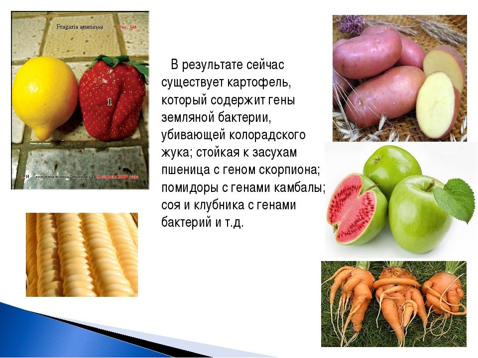 В результате сейчас существует картофель, который содержит гены земляной бакт...