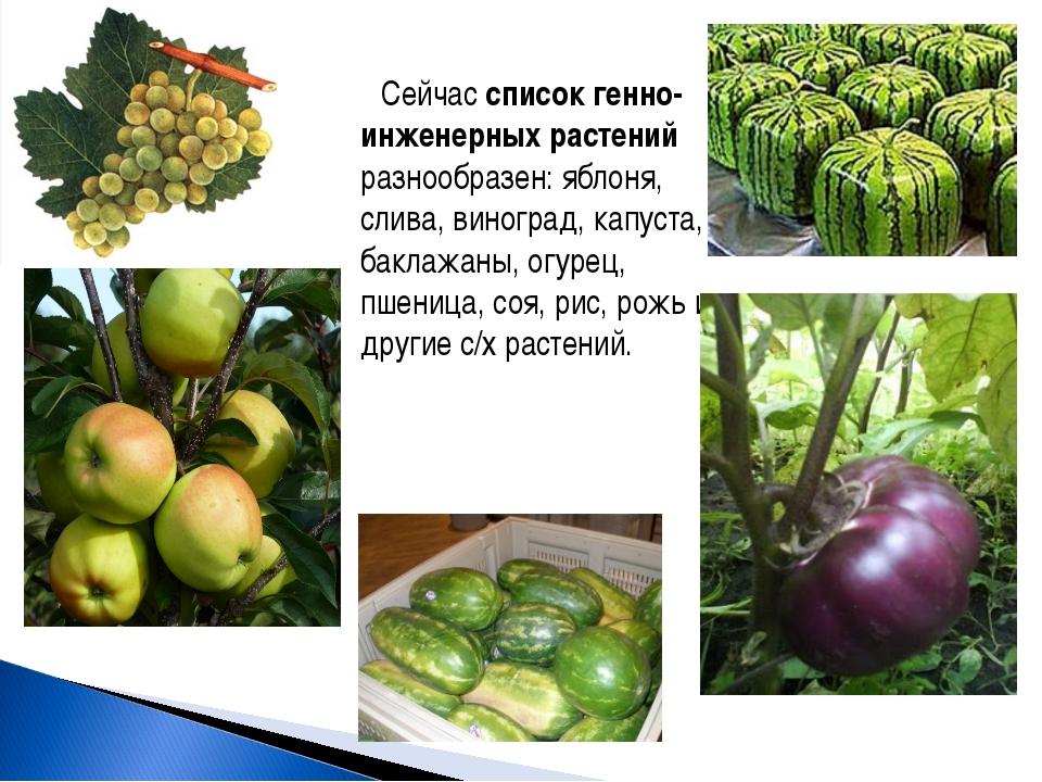 Сейчас список генно-инженерных растений разнообразен: яблоня, слива, виноград...