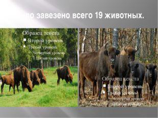 Было завезено всего 19 животных.