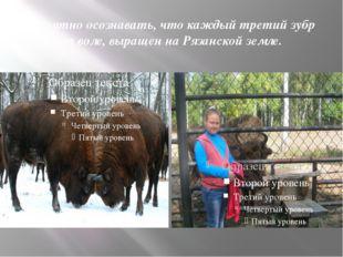 Приятно осознавать, что каждый третий зубр на воле, выращен на Рязанской земле.