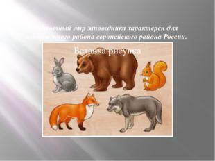 Животный мир заповедника характерен для центрального района европейского райо