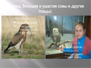 змееяд, большая и ушастая совы и другие птицы).