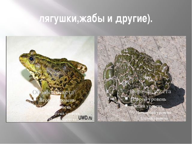 лягушки,жабы и другие).