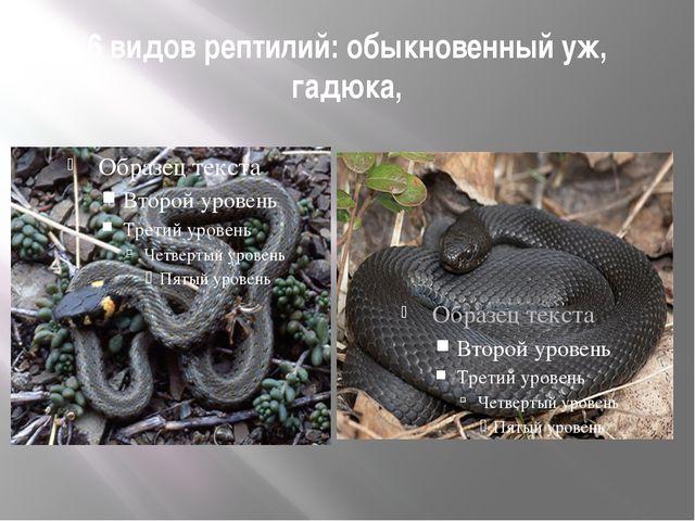 6 видов рептилий: обыкновенный уж, гадюка,