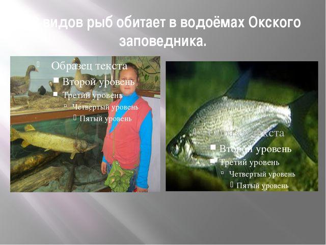 39 видов рыб обитает в водоёмах Окского заповедника.
