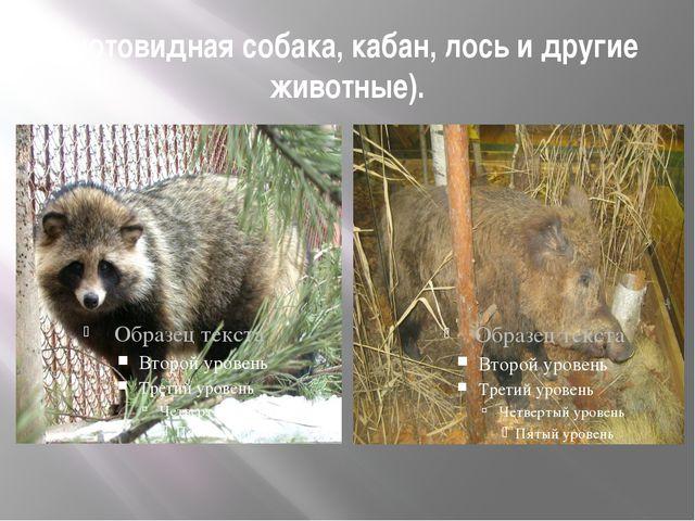 енотовидная собака, кабан, лось и другие животные).