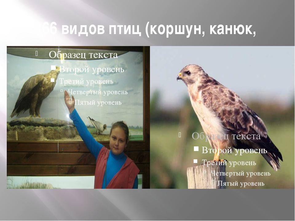 266 видов птиц (коршун, канюк,