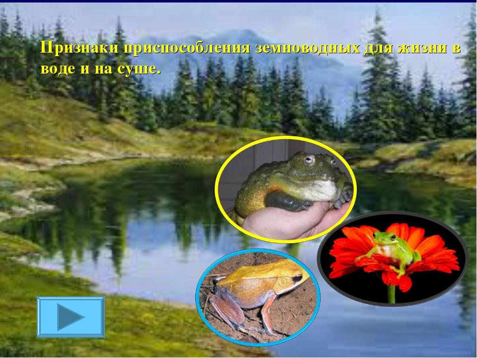 Признаки приспособления земноводных для жизни в воде и на суше.