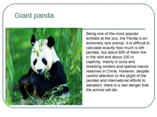 Giant panda Being one of the most popular exhibits at the zoo, the Panda is a