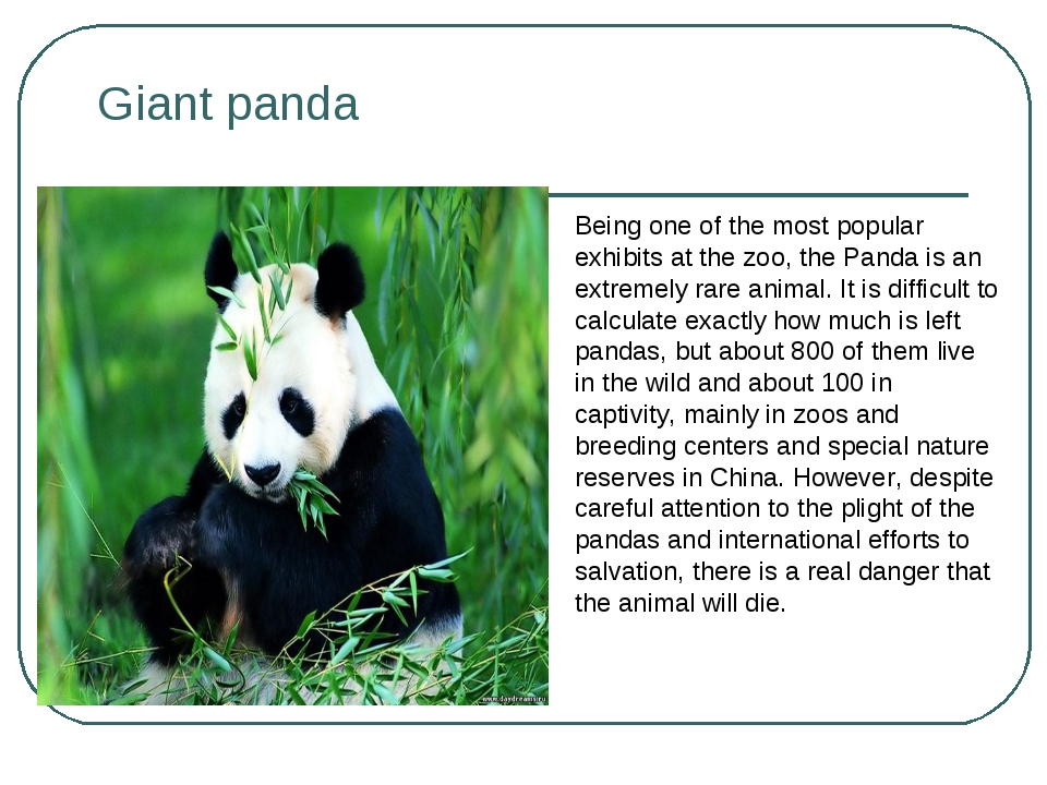 Giant panda Being one of the most popular exhibits at the zoo, the Panda is a...