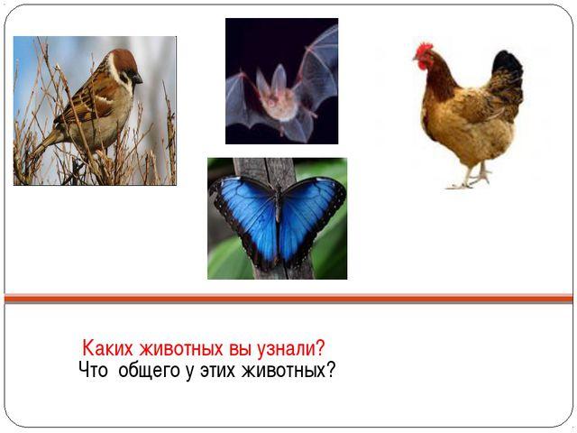 Каких животных вы узнали? Что общего у этих животных?