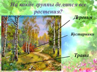 На какие группы делятся все растения? Деревья Кустарники Травы