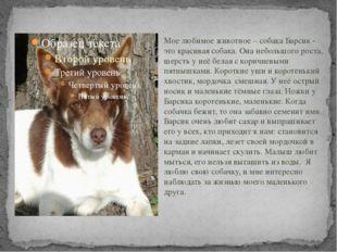 Мое любимое животное – собака Барсик - это красивая собака. Она небольшого р