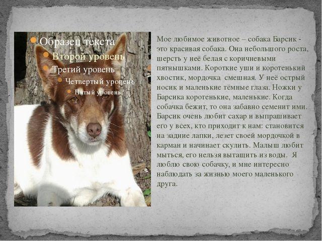 Мое любимое животное – собака Барсик - это красивая собака. Она небольшого р...