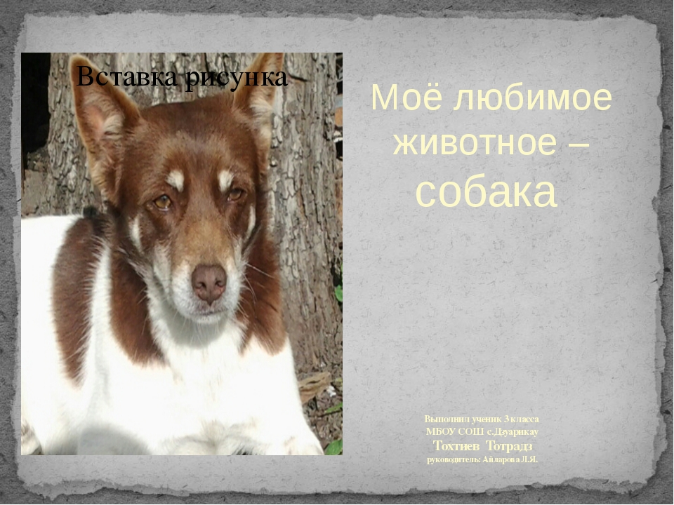 Выполнил ученик 3 класса МБОУ СОШ с.Дзуарикау Тохтиев Тотрадз руководитель: А...