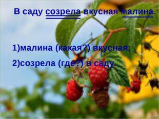 . В саду созрела вкусная малина. 1)малина (какая?) вкусная; 2)созрела (где?)