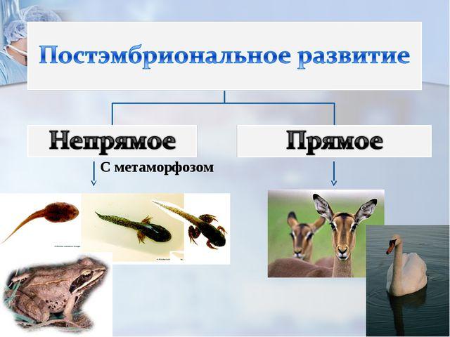 С метаморфозом