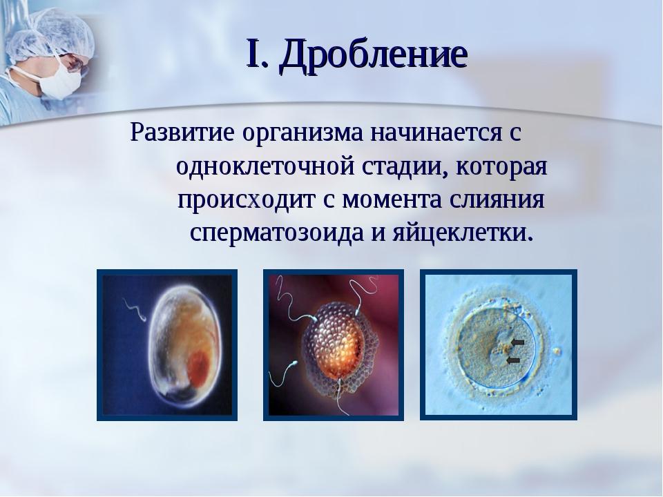 I. Дробление Развитие организма начинается с одноклеточной стадии, которая пр...