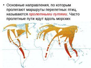 Основные направления, по которым пролегают маршруты перелетных птиц, называют