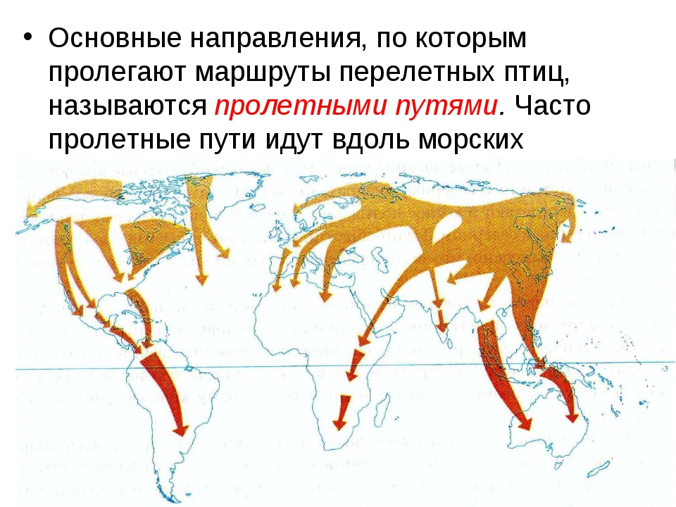 Основные направления, по которым пролегают маршруты перелетных птиц, называют...