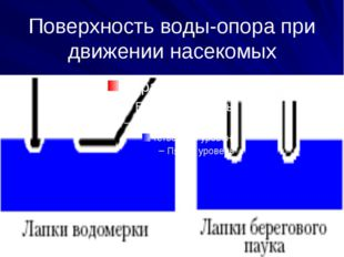 Поверхность воды-опора при движении насекомых