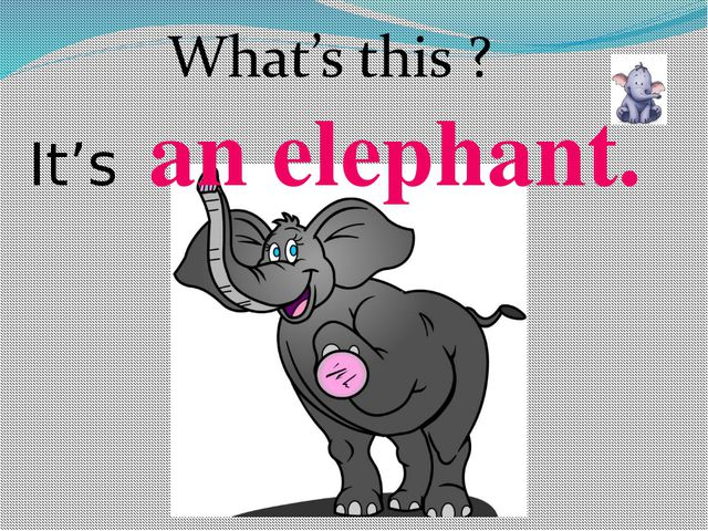 an elephant. It's