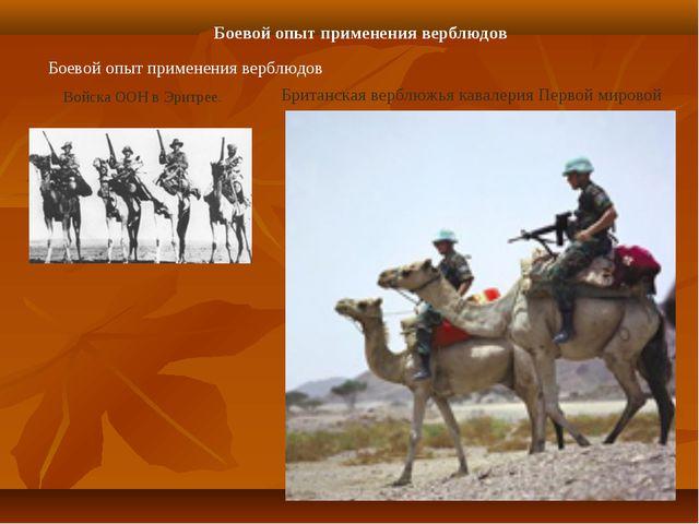 Боевой опыт применения верблюдов Боевой опыт применения верблюдов Войска ООН...