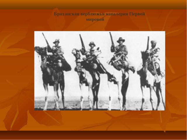 Британская верблюжья кавалерия Первой мировой