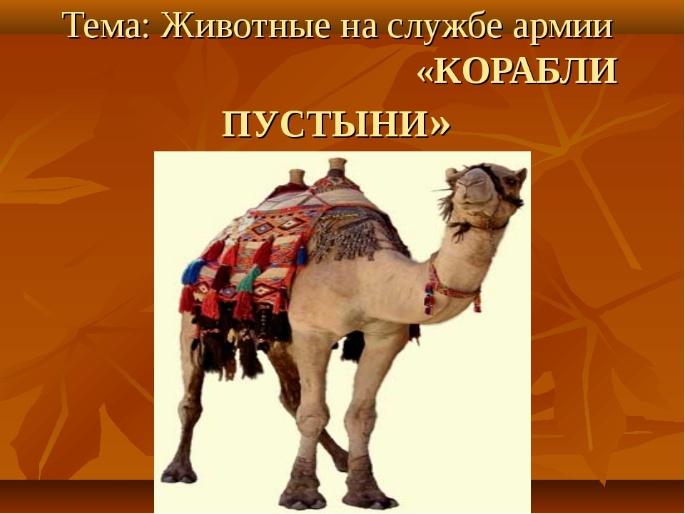 Тема: Животные на службе армии «КОРАБЛИ ПУСТЫНИ»