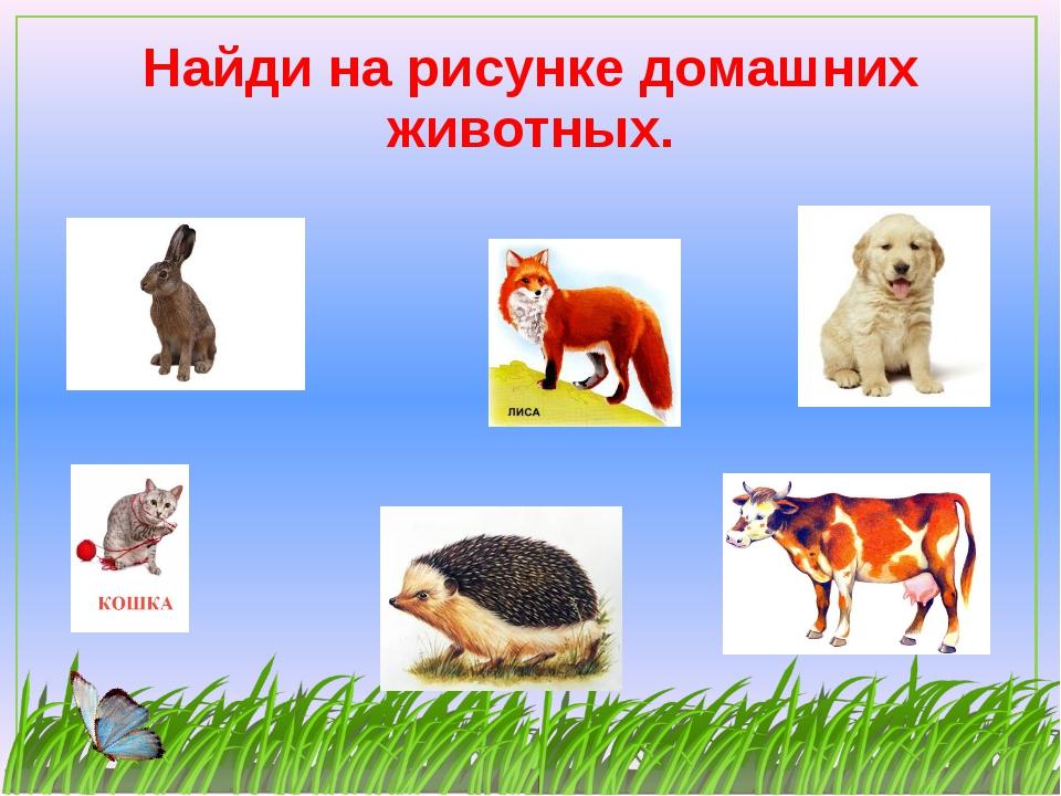 Найди на рисунке домашних животных.