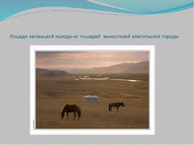 Лошади калмыцкой породы-от лошадей выносливой монгольской породы.