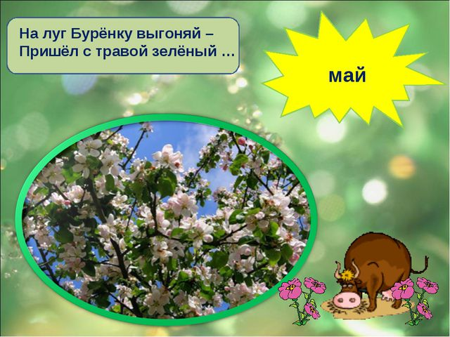 На луг Бурёнку выгоняй – Пришёл с травой зелёный … май