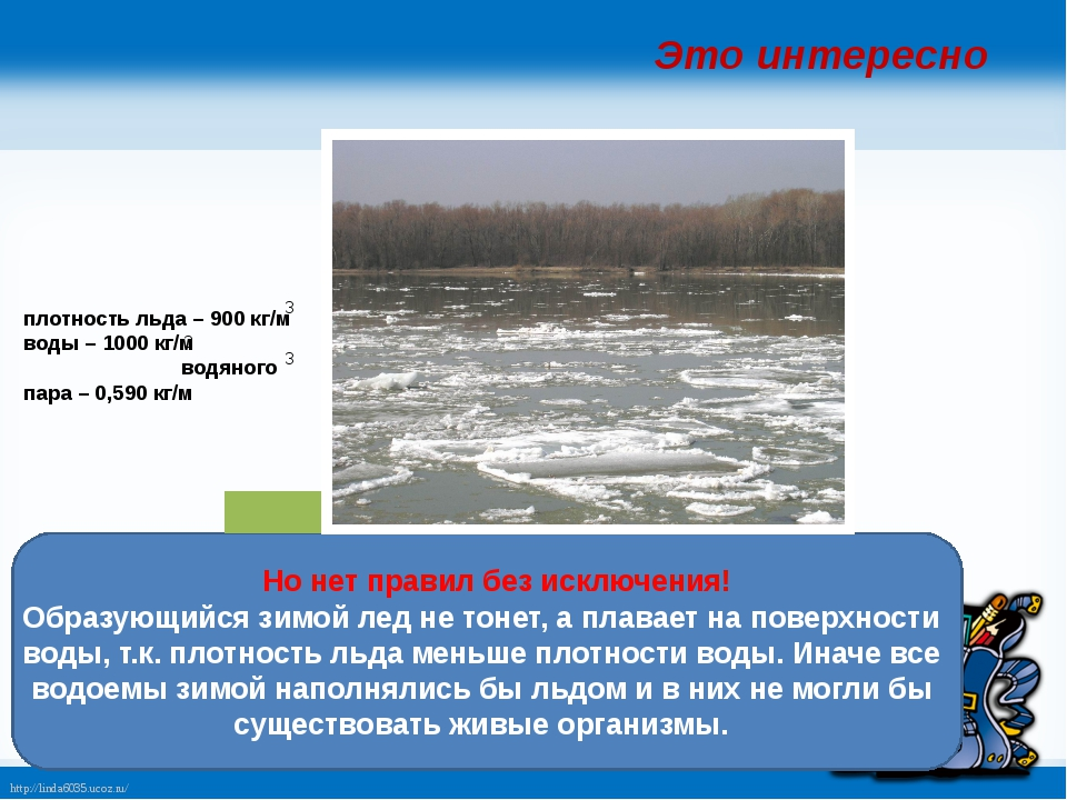 Но нет правил без исключения! Образующийся зимой лед не тонет, а плавает на...
