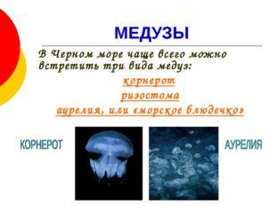 МЕДУЗЫ В Черном море чаще всего можно встретить три вида медуз: корнерот риз