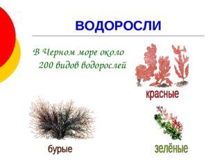 ВОДОРОСЛИ В Черном море около 200 видов водорослей