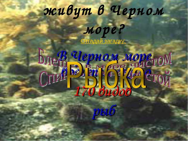 А какие животные живут в Черном море? Отгадай загадку: В Черном море водится...