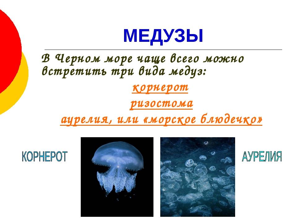 МЕДУЗЫ В Черном море чаще всего можно встретить три вида медуз: корнерот риз...