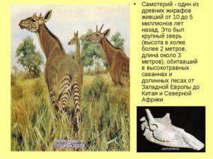 Самотерий - один из древних жирафов живший от 10 до 5 миллионов лет назад. Эт