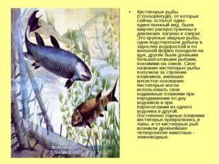 Кистеперые рыбы (Crossopterygii), от которых сейчас остался один-единственный