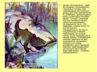 риозух (Eryosuchus) - один из поздних стегоцефалов. Огромные головы этих земн