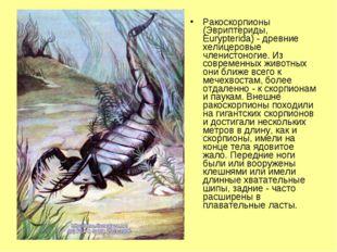 Ракоскорпионы (Эвриптериды, Eurypterida) - древние хелицеровые членистоногие.